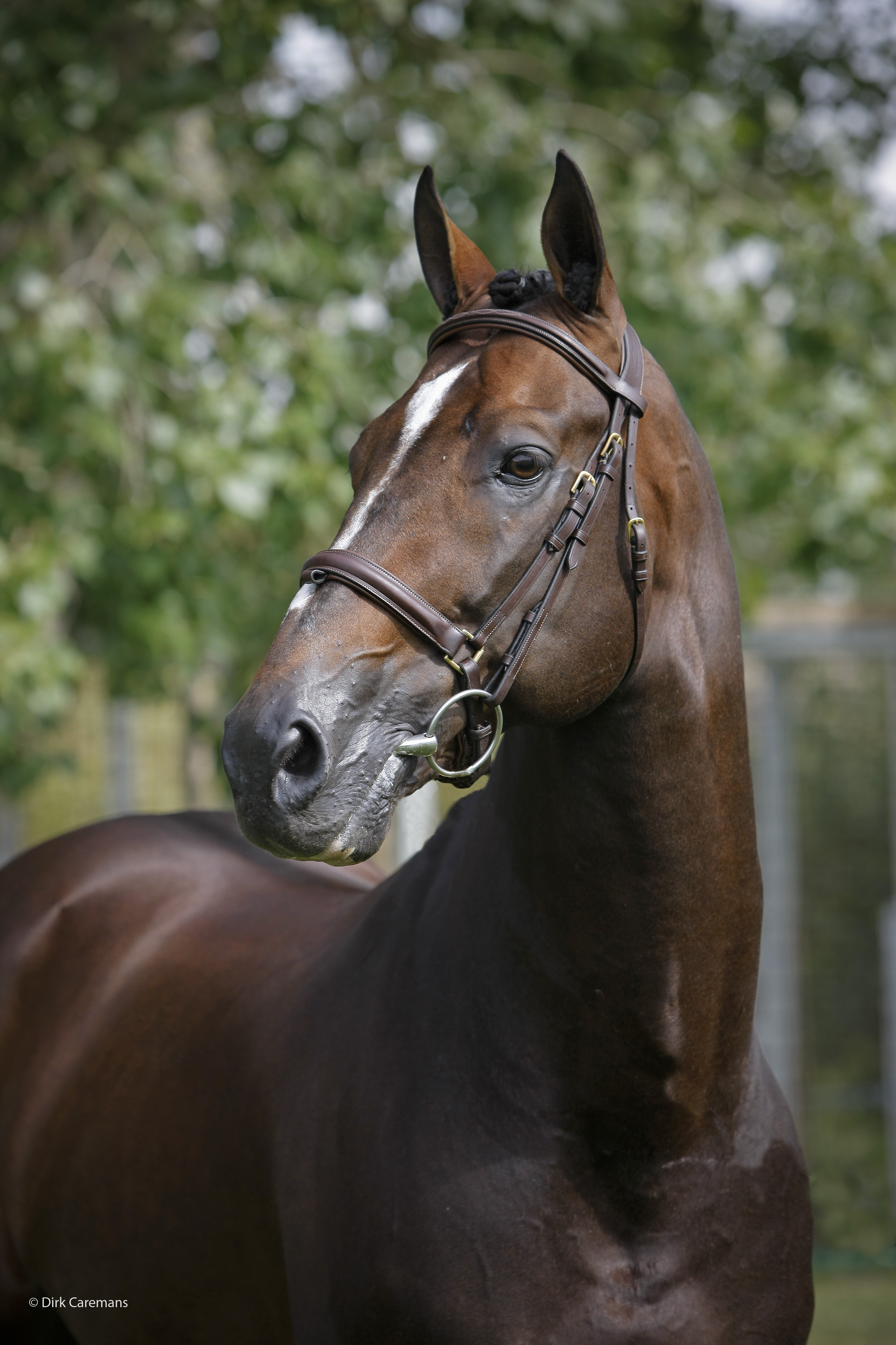 Hickstead Horse...