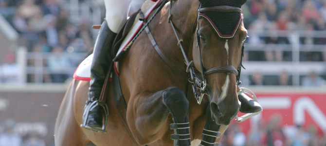 Olympic Champion Eric Lamaze Wins in France