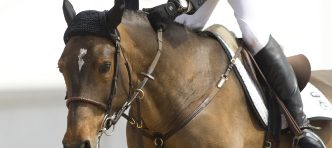 Olympic Champion Eric Lamaze Partners with SSG Riding Gloves