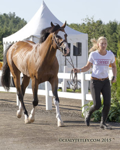 Eric Lamaze's mount, Coco Bongo, owned by Artisan Farms LLC, presented by groom Bo Vaanholt. Photo by Cealy Tetley