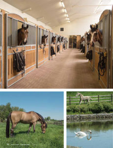 Editorial Torrey Pines Stable